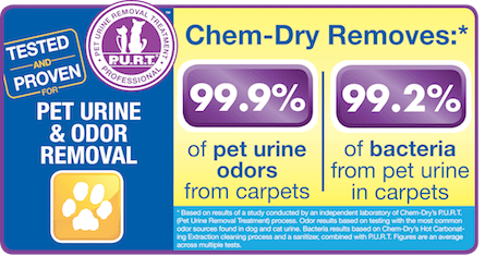 Tropical Chem-Dry technician providing professional pet urine removal treatment